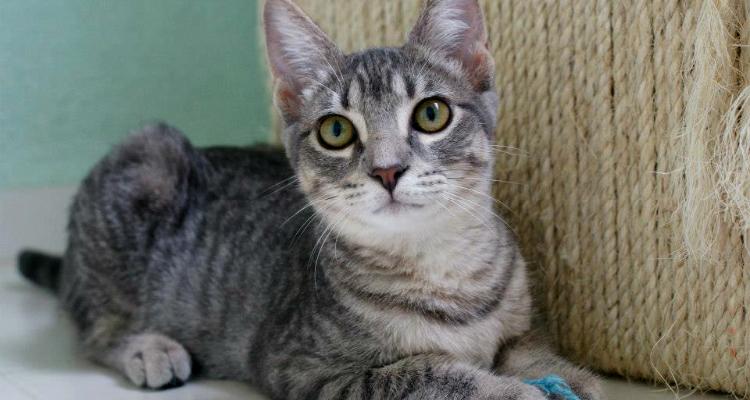 adopt-a-cat-kitten-sh-3