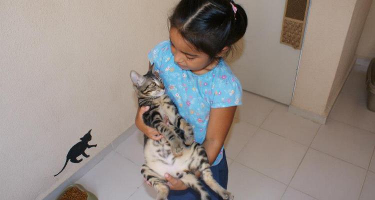 adopt-a-cat-kitten-sh-5
