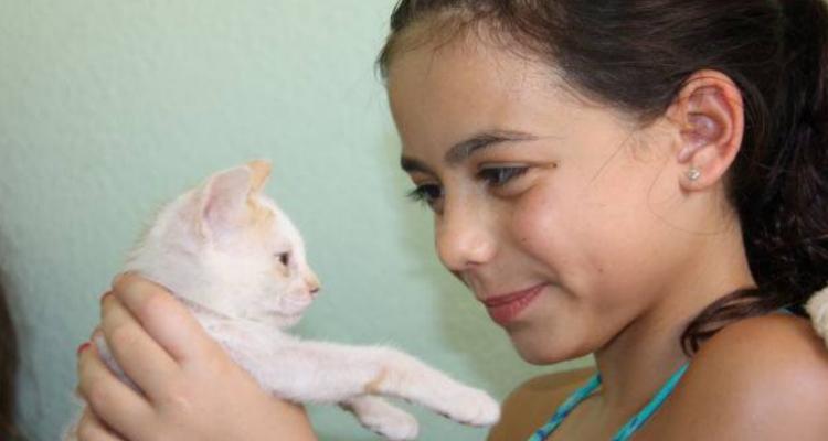 adopt-a-cat-kitten-sh-6