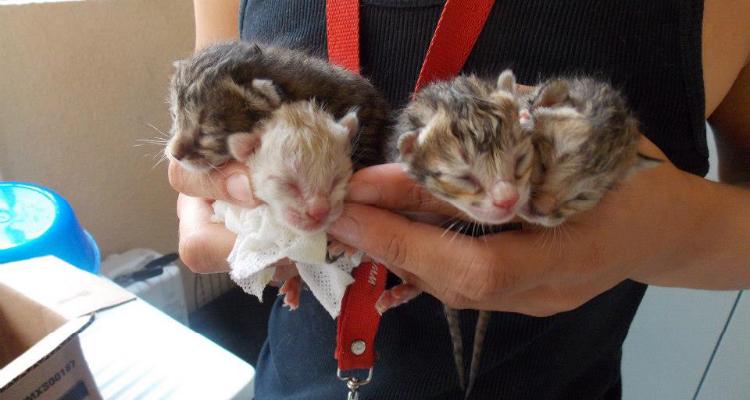 kitten-rescue-sh-5