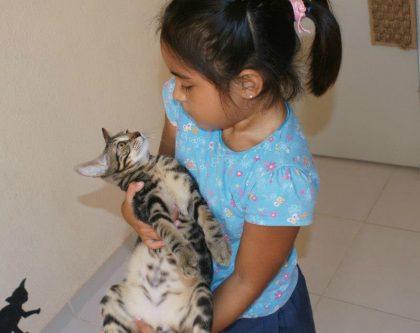 Kitten Cuddling