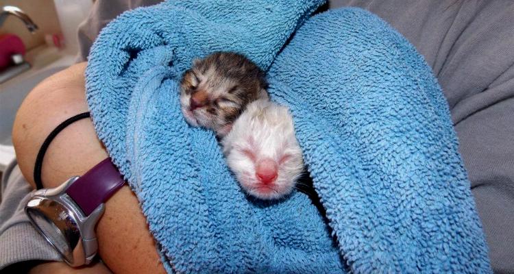 kitten-rescue-sh-6