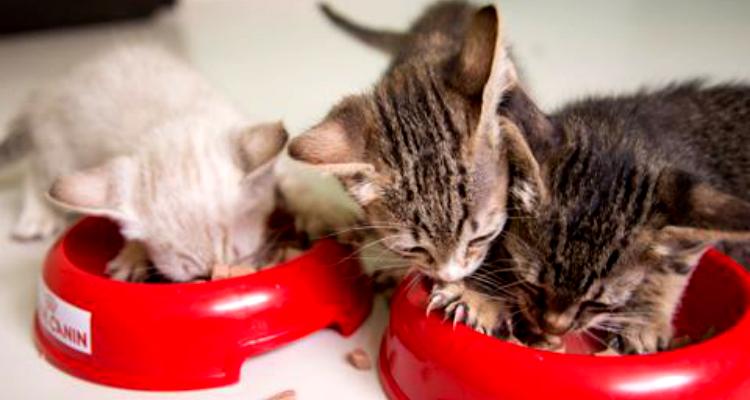 kitten-rescue-sh-7