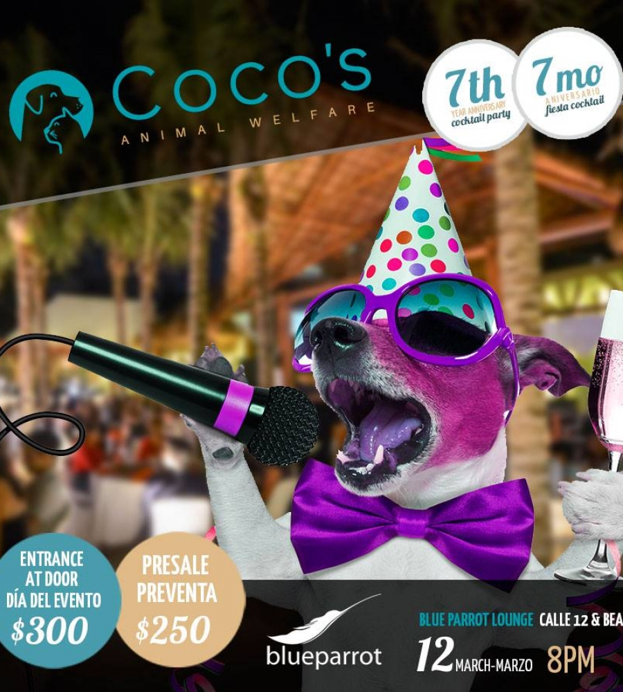 cocos animal welfare, playa del carmen, help animals